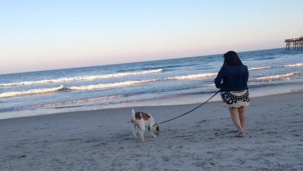 "Maria Satira's ""The Dog Blog"" – The Beach Hound (Image 1)"