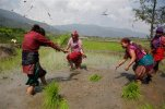 "Nepalese farmers play with sludge as they plant paddy saplings in a field on the outskirts of Kathmandu, Nepal, Tuesday, June 30, 2015. Nepalese farmers are celebrating ""asar pandhra"" Tuesday, the day Hindus consider auspicious for planting paddy. (AP Photo/Niranjan Shrestha)"