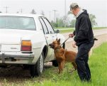 This May 13, 2014 photo provided by the Canine Training Institute in Emden, Ill., shows Lex, a K-9 with the Bloomington, Ill., Police Department during a training session with his handler Officer Justin Shively in Bloomington. On Tuesday, July 28, 2015, Chicago's 7th U.S. Circuit Court of Appeals upheld a conviction that Lex played a role in. The opinion stems from an appeal by Larry Bentley Jr, a St. Louis man serving 20 years in prison for drug possession. He argued the 20 kilograms of cocaine Bloomington police found in his car during a 2010 traffic stop derived from an illegal search triggered by Lex. (Michael Bieser/Canine Training Institute via AP)