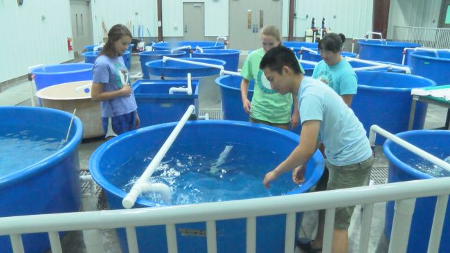 Volunteers at the Karen Beasley Sea Turtle Rescue and Rehabilitation Center