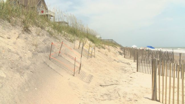 Loggerhead sea turtle nests in North Topsail Beach