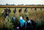 In this Thursday, Aug. 27, 2015 photo, refugees run into a corn field after crossing from Serbia through the barbed wire fence, near Roszke, southern Hungary. Round the clock, thousands of refugees cross daily along the approximately 110-mile (175-kilometer) border with non-EU member Serbia to the south. (AP Photo/Darko Bandic)
