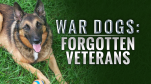 WAR DOGS FORGOTTEN VETS