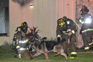 Maxx, the family dog, is credited with helping firefighters during the blaze (Photo: GoFundMe)