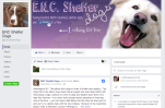 enc-shelter-dogs