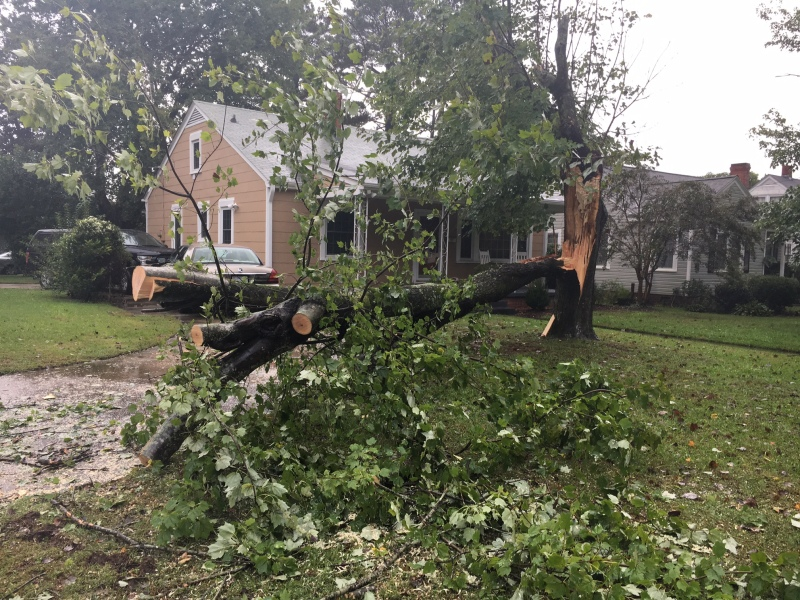 tree-down-winterville