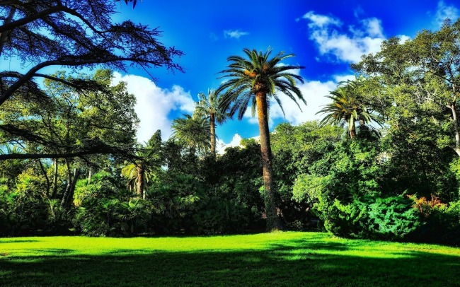 palms-in-the-park-wallpaper-1