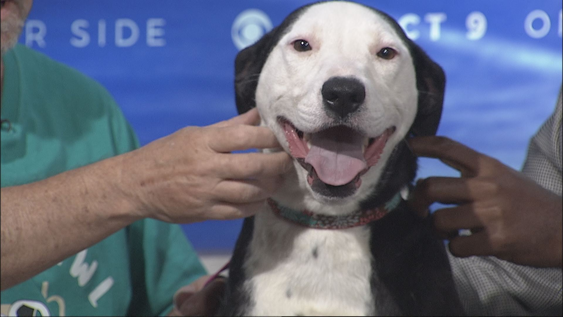 Name-your-own-price adoptions being offered by Jacksonville Humane Society