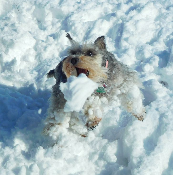 Shelly loves snow in winterville